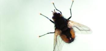 a-z-glaserei-insektenschutz